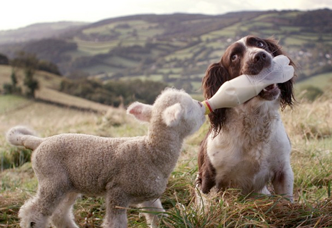 La vida secreta del perro