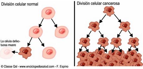 division_celular