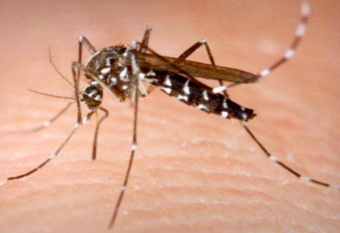 Repelente para mosquitos casero