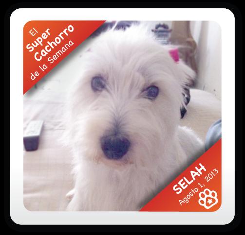 Selah: Super Cachorro de la Semana