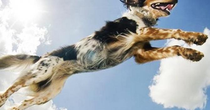 El Bienestar Físico De Mi Perro