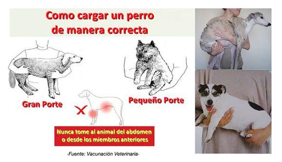Cargar a un perro