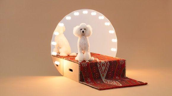 arquitectura-perro1
