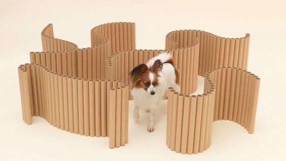 arquitectura-perro10