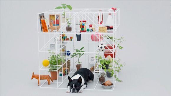 arquitectura-perro11