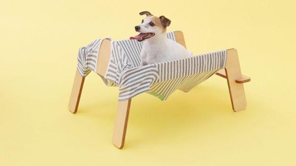 arquitectura-perro12