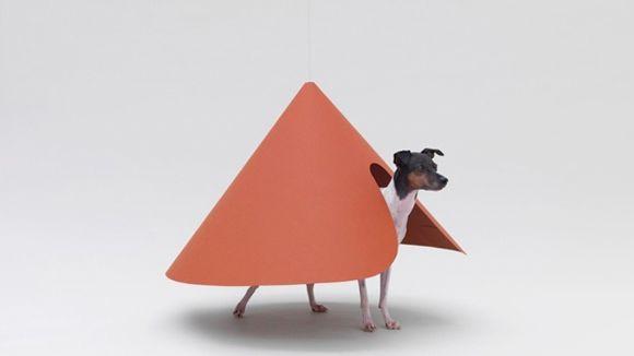 arquitectura-perro3