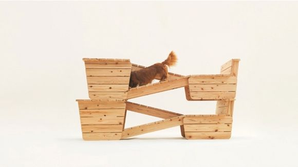 arquitectura-perro5
