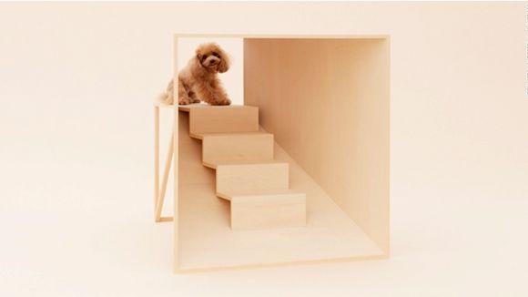 arquitectura-perro6