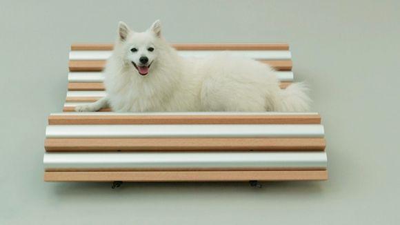 arquitectura-perro7