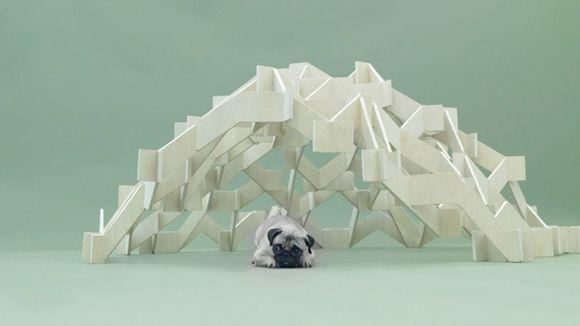 arquitectura-perro8