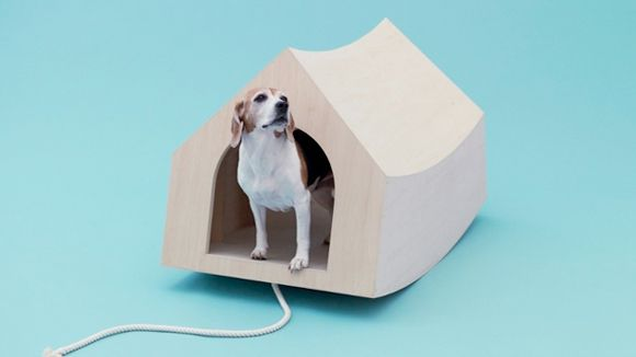 arquitectura-perro9