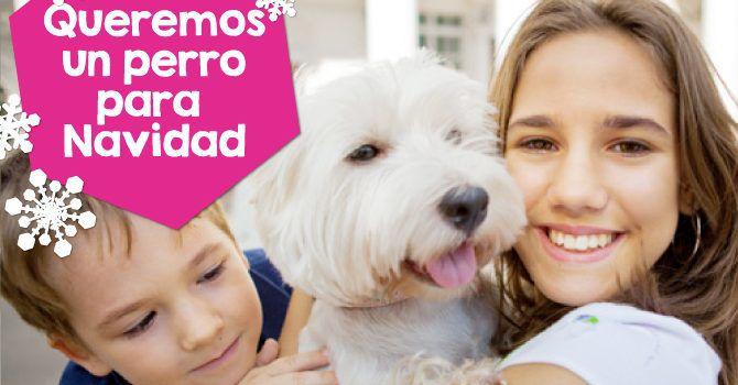 Queremos Un Perro Para Navidad