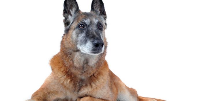 Prueba Los Sentidos De Tu Super Cachorro