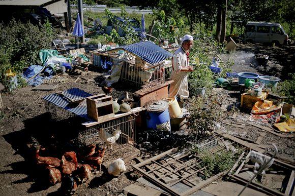 pb-131003-fukushima-dogs-da-02.photoblog900