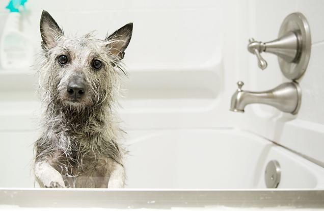 El primer baño de un cachorro