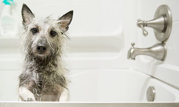 El Primer Baño de un Perro