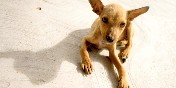 Vera Smith Puppy By Allison Gray