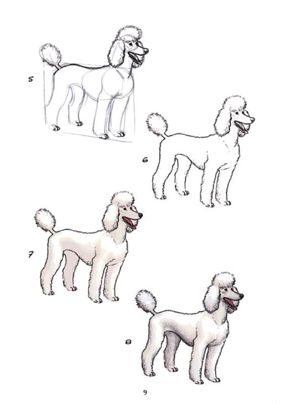 Página 9 - Dibujo Y Pinto Perros