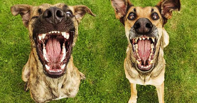 Expresiones Caninas