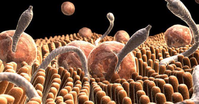 parasitos perros intestinales