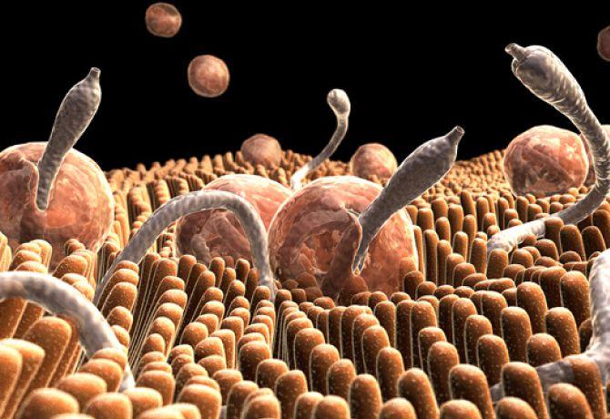 La zanahoria contra los parásitos