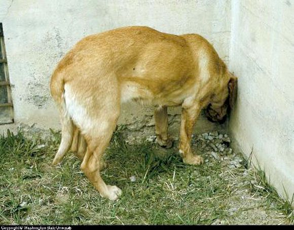 Si tu mascota hace esto llévalo al veterinario