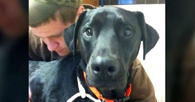 La Propina Pagó La Cirugia De Su Perro