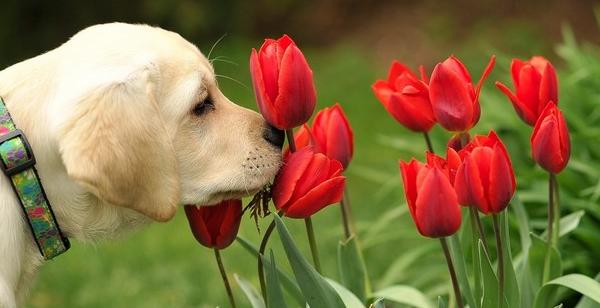 ¡Deja a tu Super Cachorro usar su nariz!