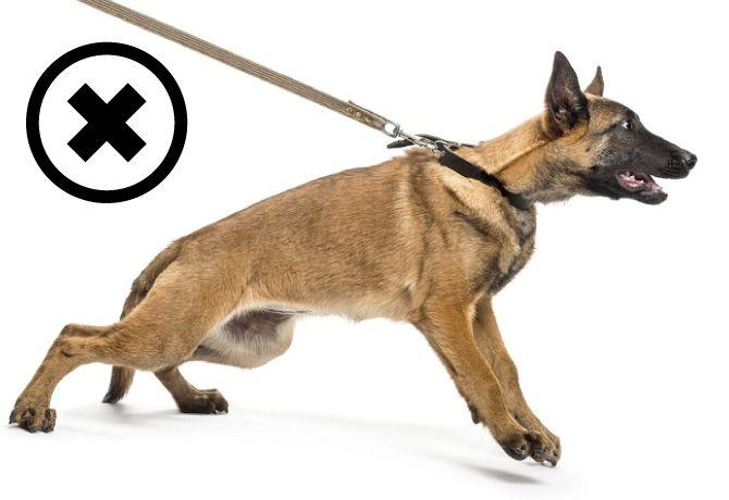 Cuidado con el cuello de tu perro