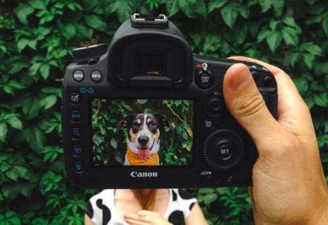 Una cámara con lente canino