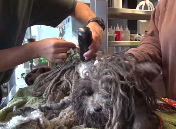 4theo-gets-haircut