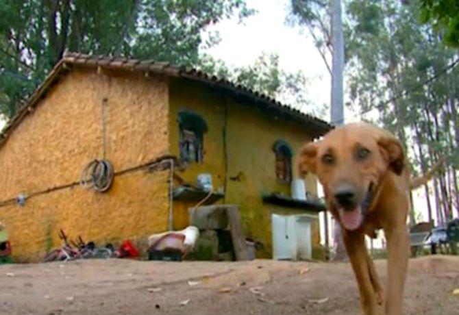 La expresión de la solidaridad canina