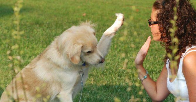 Enseñando A Un Perro A Saludar