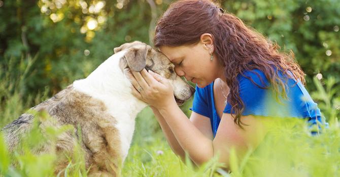 Los Perros Mejoran Nuestra Salud