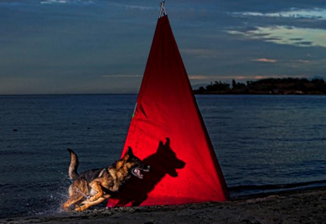 Perros en movimiento