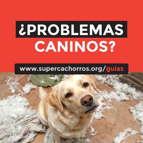 Guías Super Cachorros Certificados y Afiliados