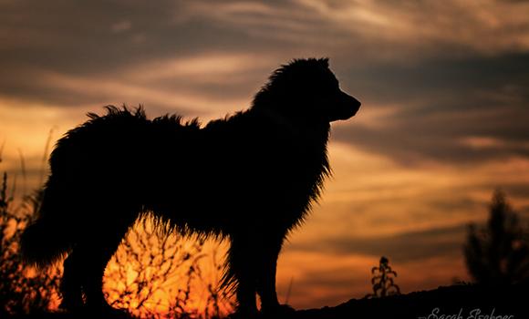 La Pictorialista Canina