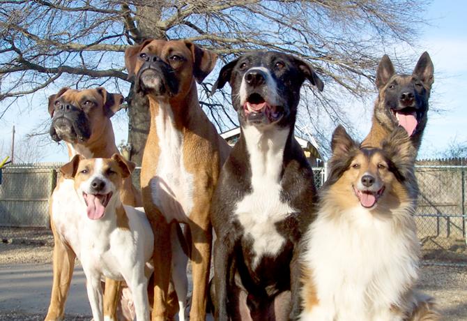 10 cosas que le hacen saber a tu perro que SI lo amas