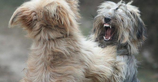 Agresión En Perros