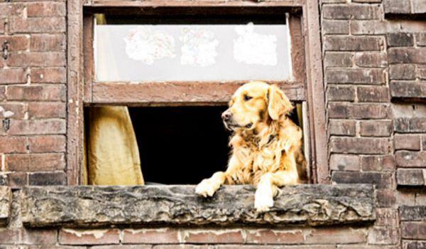 De Perros Que Saben Que Sus Amos Están Camino A Casa