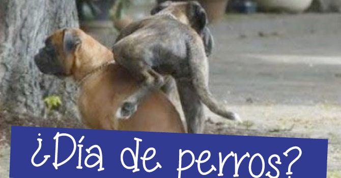 Es Un Día De Perros ¿De Dónde Viene La Expresión?