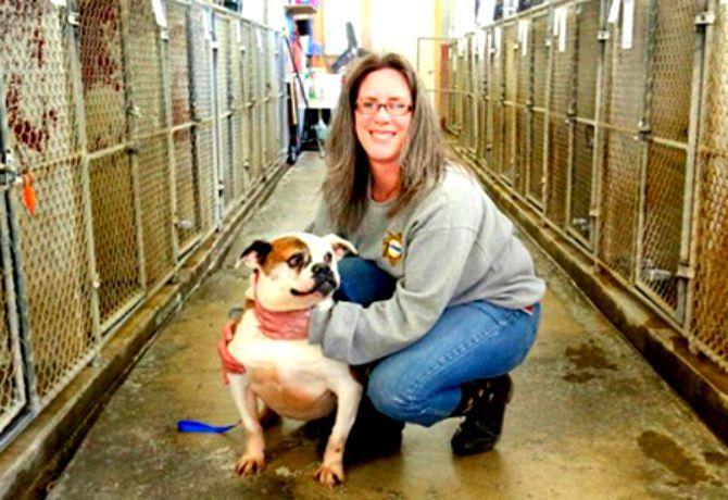 Reubicación de refugio canino