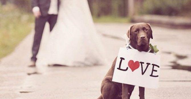 Como Saber Si Mi Perro Me Quiere