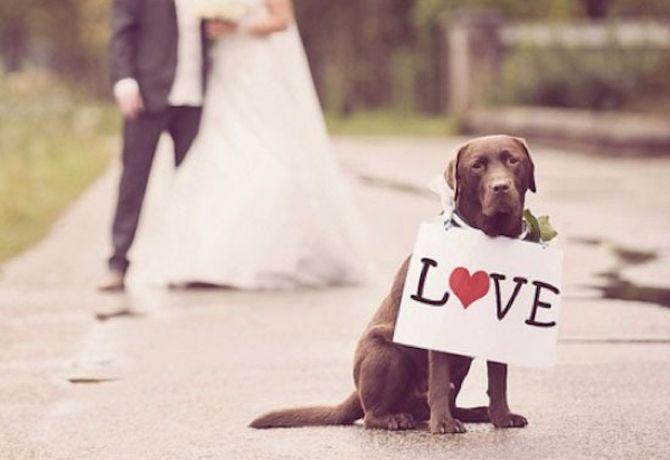Cómo saber si mi perro me quiere – 1a Parte