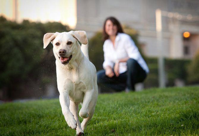 10 cosas que siempre habías querido saber sobre tu perro