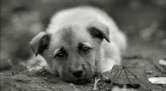 Sad-puppy_insert