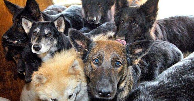 Investigación: Acumulación De Perros Y Gatos