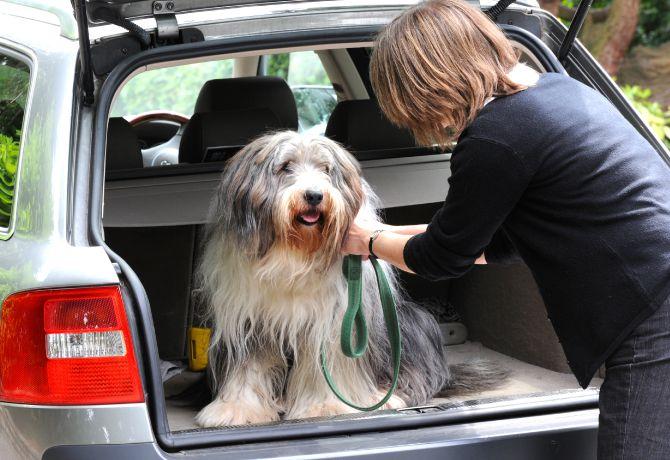 De viaje en auto con tu Super Cachorro