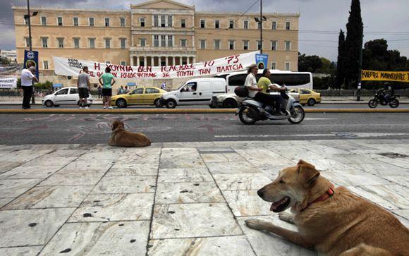 greece-riot-dog-16_1927015i